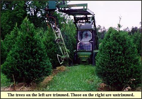 christmas tree trimming shaping at shady pond tree farm