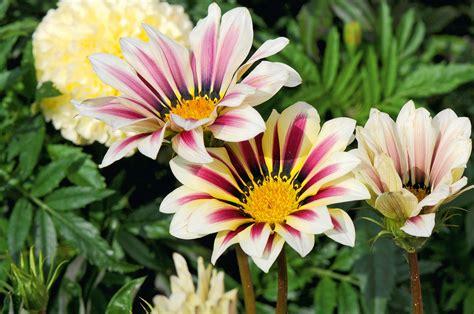 envie de printemps commande de fleurs jardin express