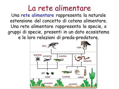 esempio di rete alimentare l ambiente e l ecologia ppt scaricare