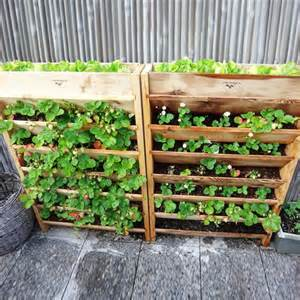 Vertical Vegetable Garden Planters 562 Best Images About Vertical Garden On Green