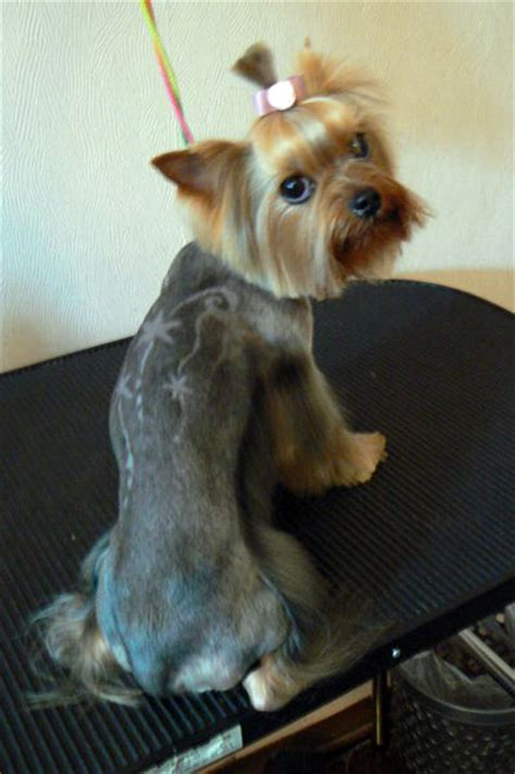 best clippers for yorkies explore yorkie haircuts pictures and select the best style for your pet