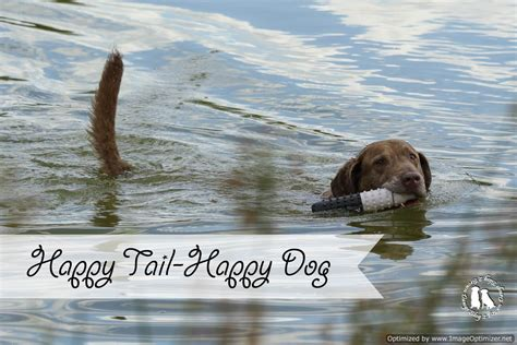 happy tails puppies happy happy 2 brown dawgs