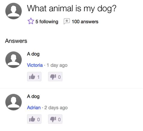 The Place Project Yahoo Answers The 16 Most Questions Asked On Yahoo Answers In 2015 Pleated