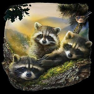 what color are raccoons new three raccoons raccoon tshirt sizes colors ebay