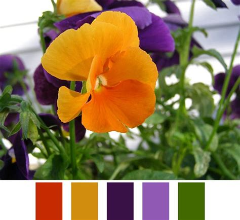 purple and orange color scheme color scheme idea orange and purple color palette