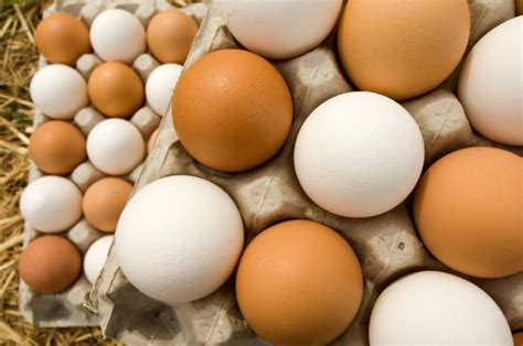 What Is The Shelf Of Fresh Eggs by 5 Ways To Preserve And Store Fresh Eggs Microfarm Organic Gardens Microfarm Organic Gardens