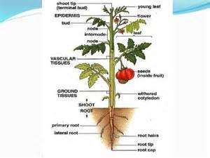 Part Of A Flower Worksheet - 6 plants