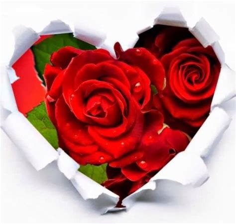 imagenes de corazones unidos por rosas imagenes de rosas rojas dentro de un corazon imagenes de