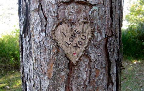 your tree i you carved for tree pottery sign