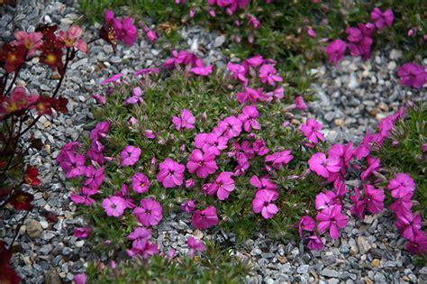 piante fiorite da giardino perenni perenni vivai rulli garden marsciano
