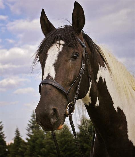 photo gratuite le cheval panache animal image gratuite sur pixabay