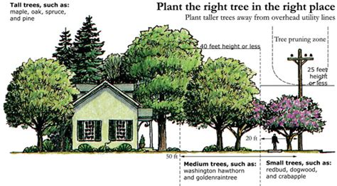 Small Trees To Plant Near House by Tree Planting Tips Umatilla Electric Cooperative