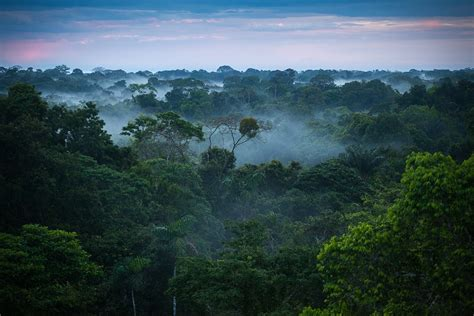amazon forest amazon rainforest feel the rainfall of leaves found the