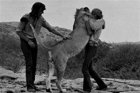 film lejonet elsa christian the lion oil painting and giclee prints