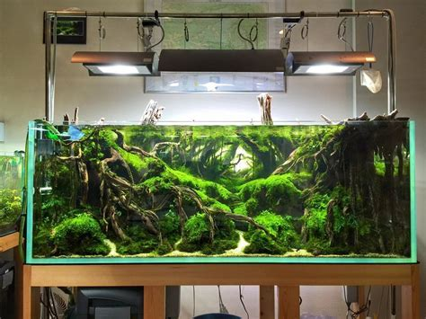 Freshwater Aquascaping Ideas by 50 Aquascape Aquarium Design Ideas Aquarium Design