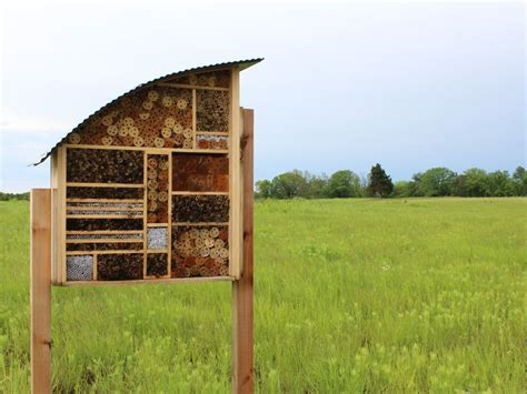 Bee Hotels Give Native Species a Place to Call Home   Iowa