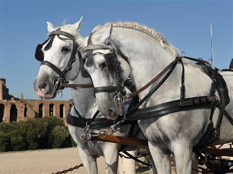 Carrozza Con Cavalli Per Matrimonio by Noleggio Carrozza Matrimonio Con Cavalli Toscana Grosseto