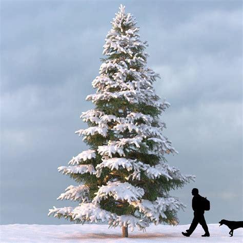 winter tree winter tree 3d model