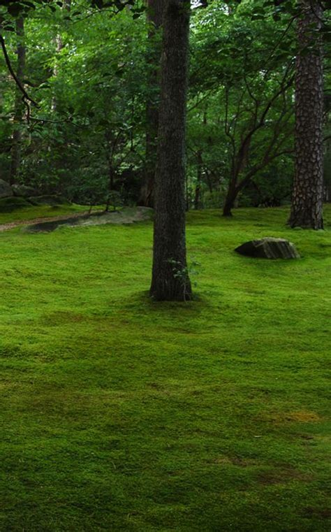 how to grow moss moss and stone gardens blog best