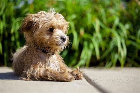 uti in dogs urinary tract infection in dogs cats canna pet