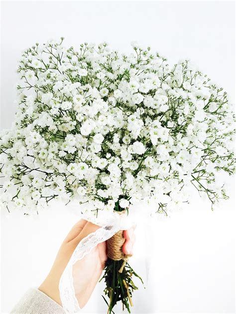 Buket Snack Wisuda Ss 10 Bouquet Graduation free photo gypsophila elegans flowers free image on pixabay 2170794