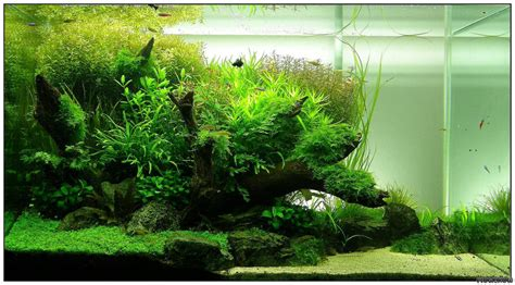 layout aquascape 90x50x50 layout 4 flowgrow aquascape aquarien datenbank
