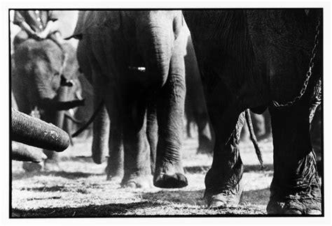 1325266736 des elephants et des hommes des 233 l 233 phants et des hommes