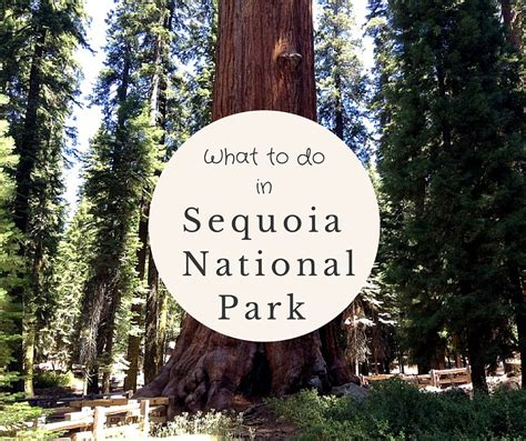what to do for on day what to do in sequoia national park in one day no back home