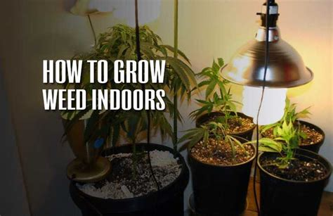 grow weed indoors  definitive guide