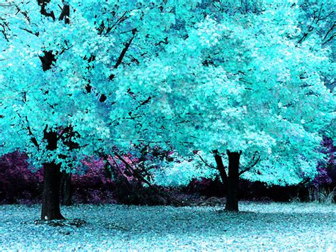 title blue trees tumblr