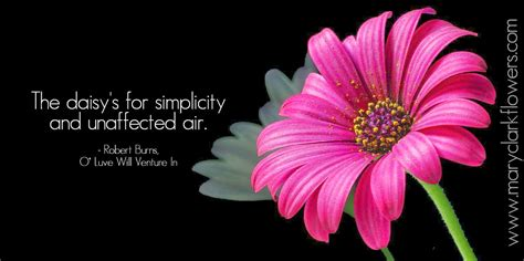 flower wallpaper with love quotes pink flowers quotes 20 free hd wallpaper