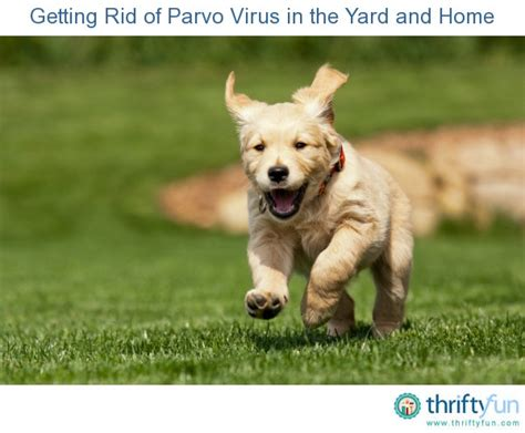 how to get rid of parvo in puppies getting rid of parvo virus in the yard and home thriftyfun