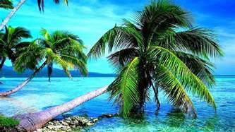 Palm Tree Wallpaper by Wallpapers Hd Desktop Wallpapers Free Online Breath
