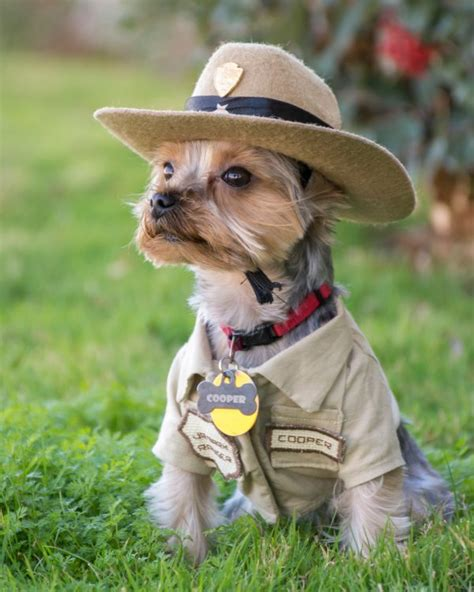 dogs in national parks pups in parks how to experience u s national parks with your rei co op journal