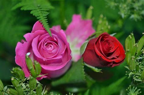 Pajangan Bunga Rosse 217 24 800118392 rosas rojas im 225 genes gratis en pixabay