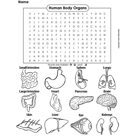 printable word searches human body human body word search educents