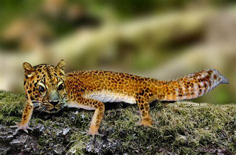 Leopard Gecko 2 der leopardgecko foto bild hybriden natur composing