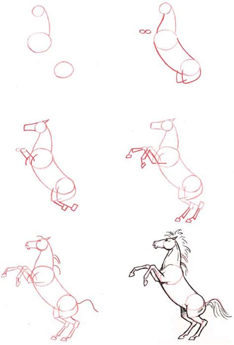 how to draw animals learn to draw for step by step drawing how to draw books for books lifeandhealth and health