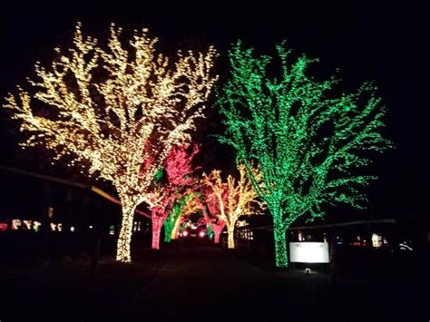 beautiful trees at holiday lights on the lake picture of