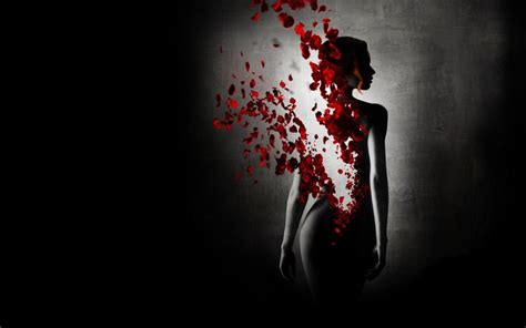 imagenes artisticas de flores galer 237 a de im 225 genes im 225 genes art 237 sticas de rosas