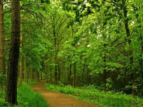 Imagenes De Paisajes Naturales Bosques   imagenes de paisajes naturales paisajes de bosques