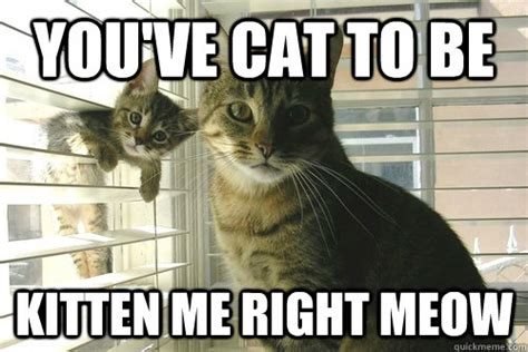 Meow Meme - you ve cat to be kitten me right meow misc quickmeme