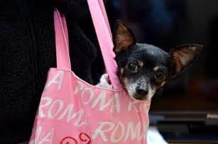 cani da appartamento consigli cani in aereo tutto quello devi sapere