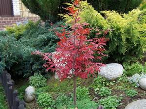 best trees best trees to plant for small yards best trees to plant