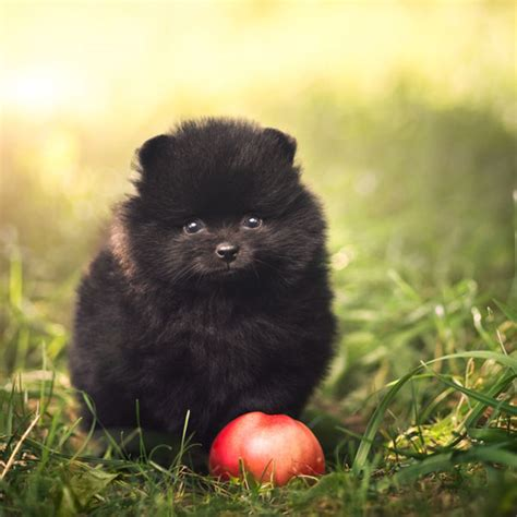 dogs and apples can dogs eat strawberries apples and grapes