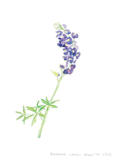 watercolor tattoo wildflowers best 25 bluebonnet ideas on lilac