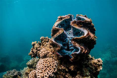 ningaloo reef dive a soundtrack to your whale shark season ningaloo reef