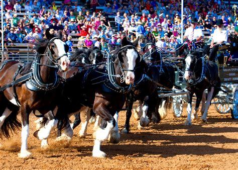 Harvest Fair At The 2015 Draft Horse Classic Grass Valley Ca Classic Grass Valley Ca