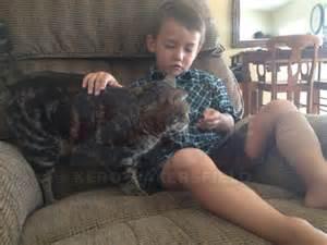 Strange news 2014 brave family cat saves california boy from dog