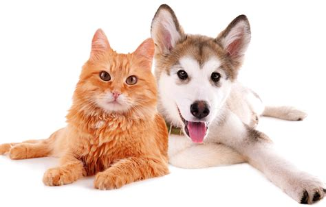 puppy and cat selfish cat loyal funniest wallpapers hd